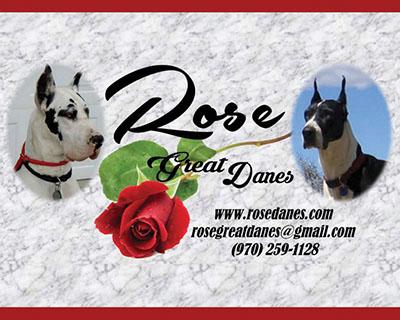 Great Dane Review » Breeders