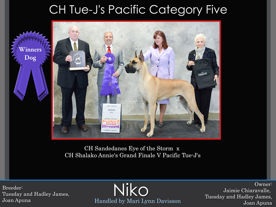 niko-winners-dog