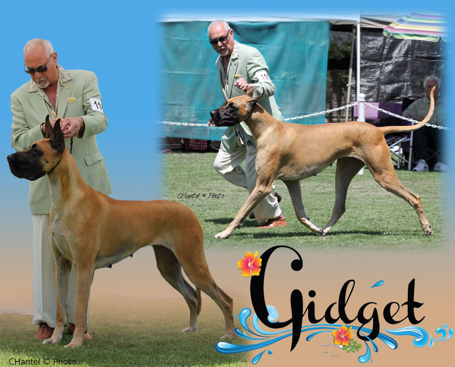 "May Feature – CH Von Evans, MnM, I Can, I Am & I Will of Lore ""Gidget"""