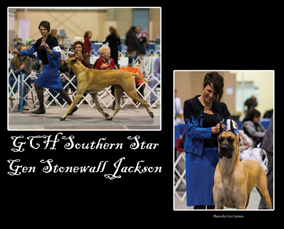 "May Feature – GCH Southern Star Gen Stonewall Jackson ""Jack"""