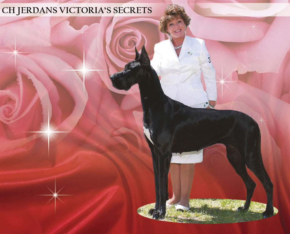"December Feature – CH Jerdans Victoria's Secrets – ""Victoria"""