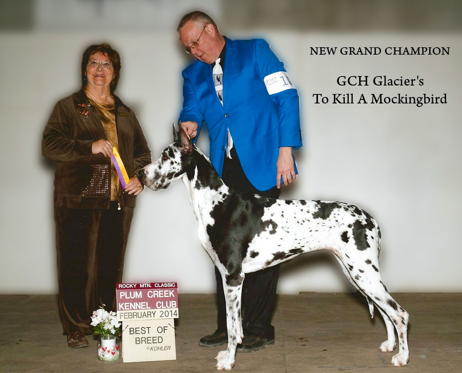 "April Feature – GCH Glacier's To Kill A Mockingbird ""Scout"""