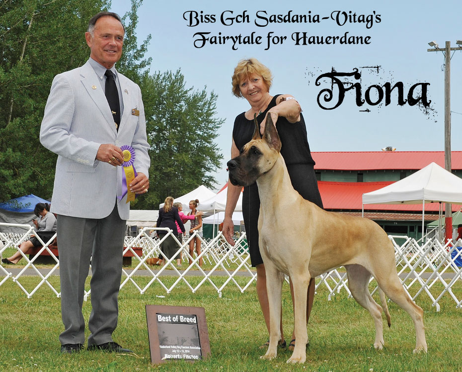 "August Feature – BISS GCH Sasdania-Vitag's Fairytale for Hauerdane – ""Fiona"""