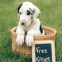 Puppy Photo Contest