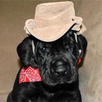 Puppy Photo Contest – Week 2