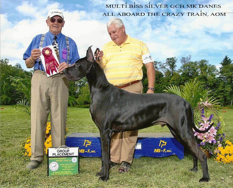 "October Feature – BISS Silver GCH MK Danes All Aboard The Crazy Train, AOM ""Ozzy"""