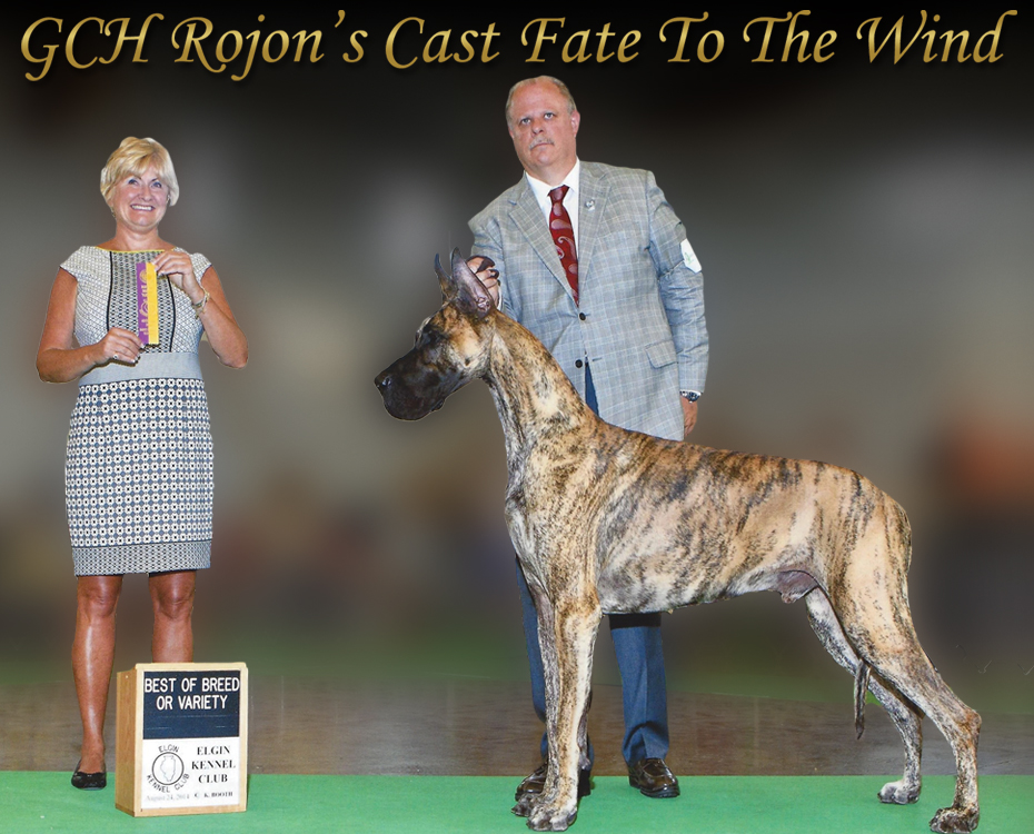 "October Feature – GCH Rojon's Cast Fate to the Wind ""Sirocco"""