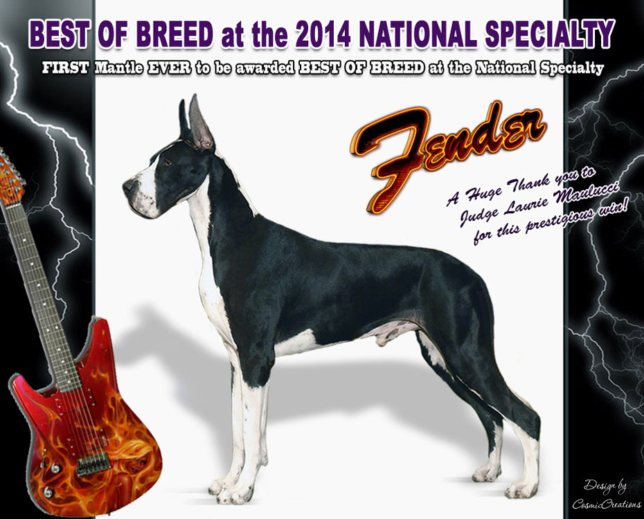 "November Feature – MBISS BIF GCH WindyCity-Orion's Guitar Hero, AOM ""Fender"""