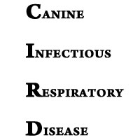 CANINE INFECTIOUS RESPIRATORY DISEASE