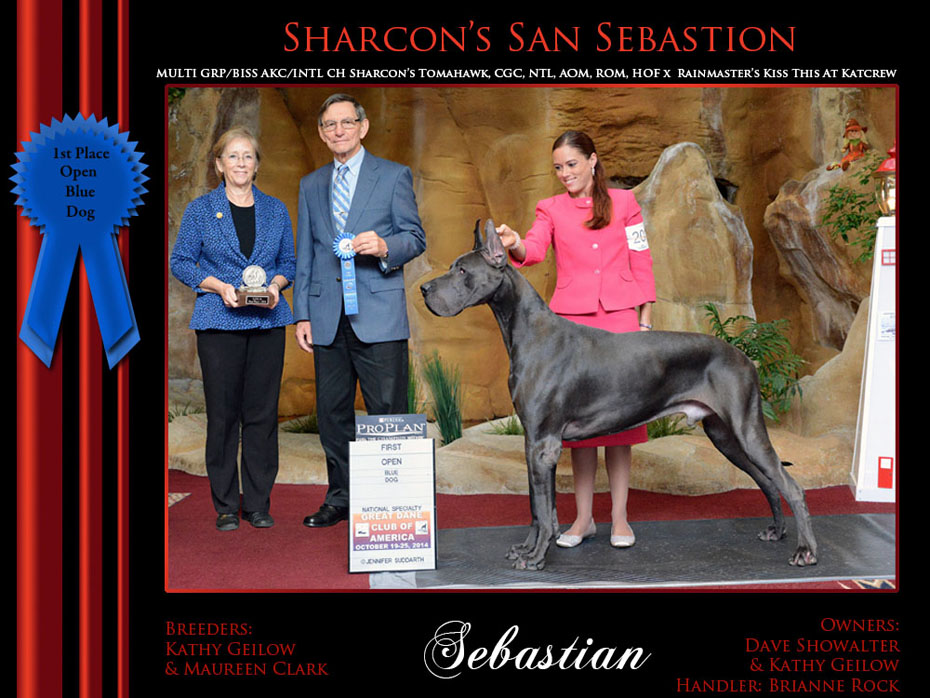 1st open blue dog Sebastian