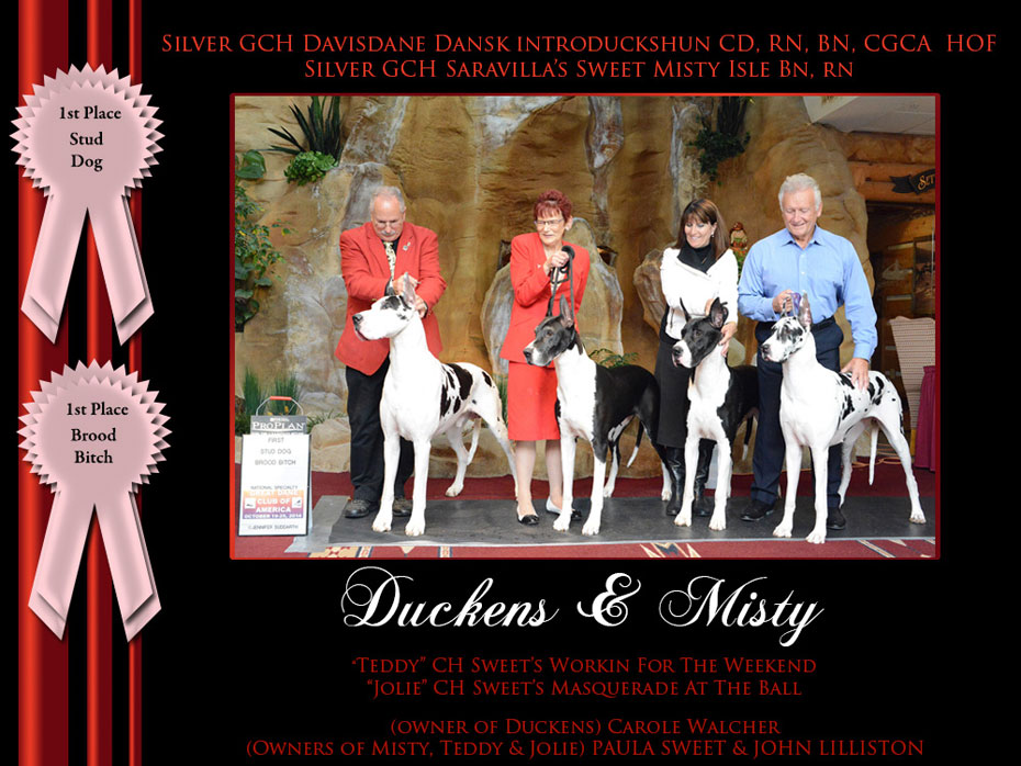 1st-stud-dog-1st-brood-bitch-misty-duckens