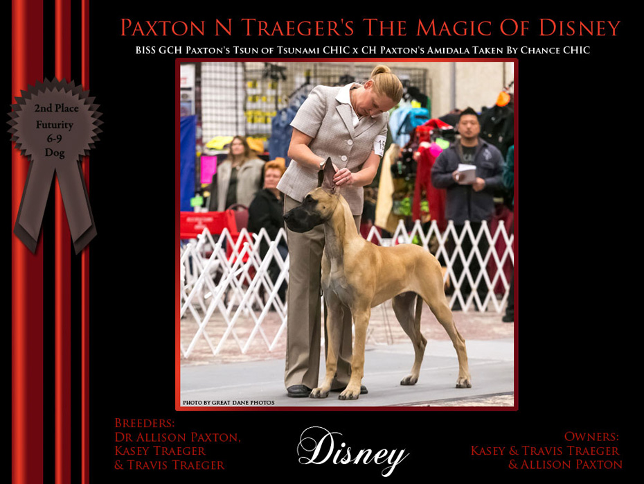 2nd_Futurity_6-9_Dog_Disney