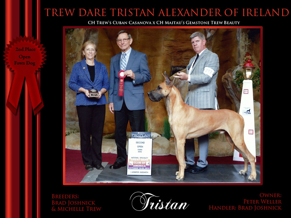 2nd_Open_Fawn_Dog_Tristan