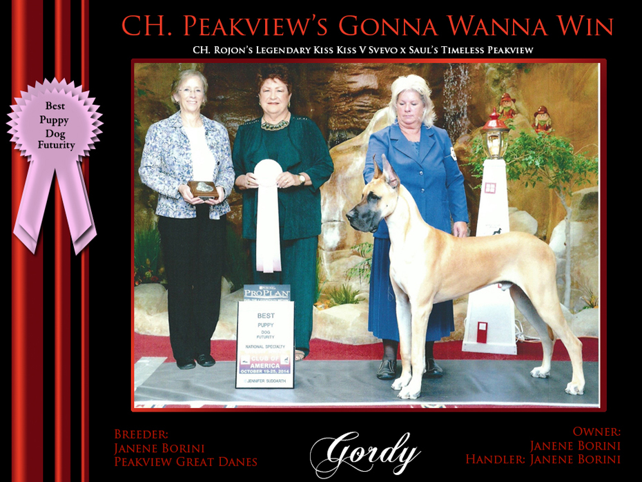 Best puppy dog Futurity gordy