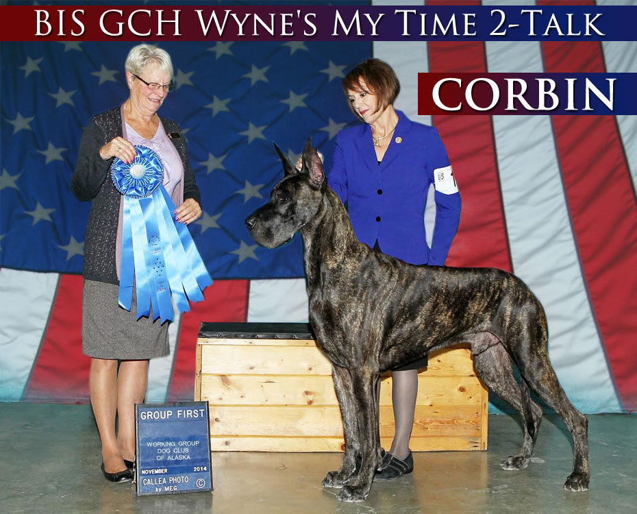 "December Feature – BIS GCH Wyne's My Time 2-Talk ""Corbin"""