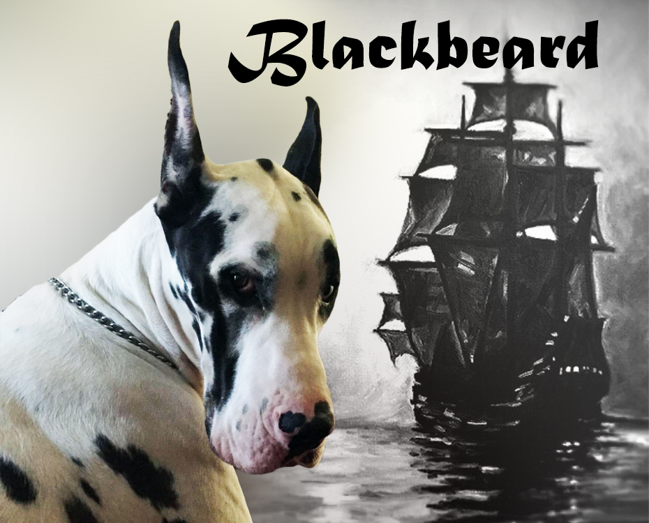 "April Feature – McCarty's 100 Proof Capt. Morgan of Smpsd ""Blackbeard"""