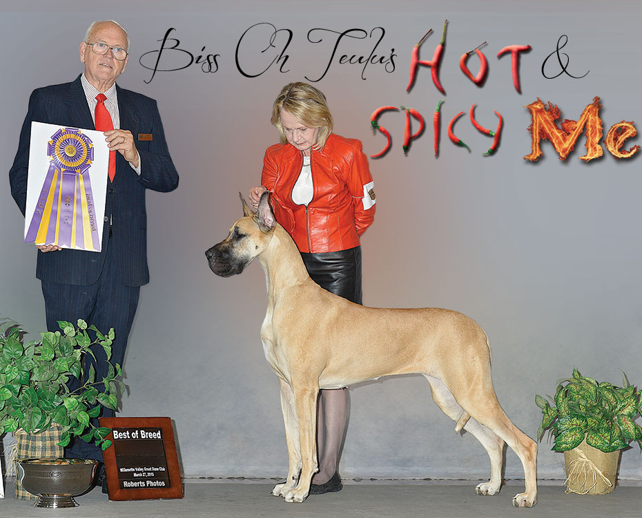"""May Feature – BISS CH Teulu's Hot & Spicy Me """"Ari"""""""