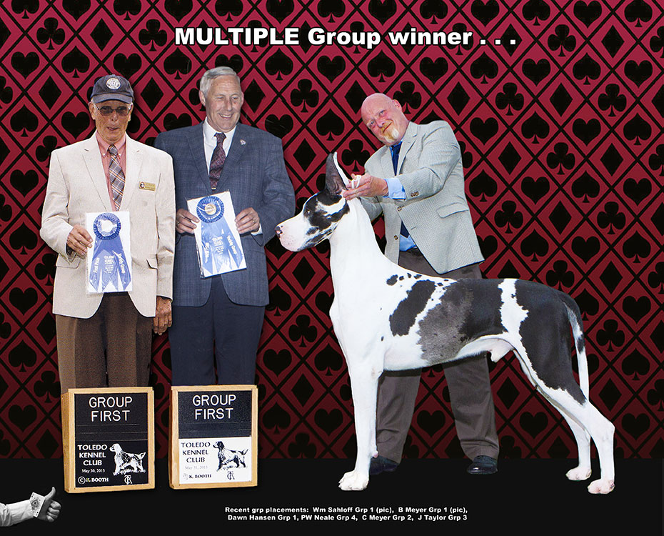 "July Feature – BIS BISS GCH GMJ Daneridge LeanMeanGamblingMChine ""Bookie"""