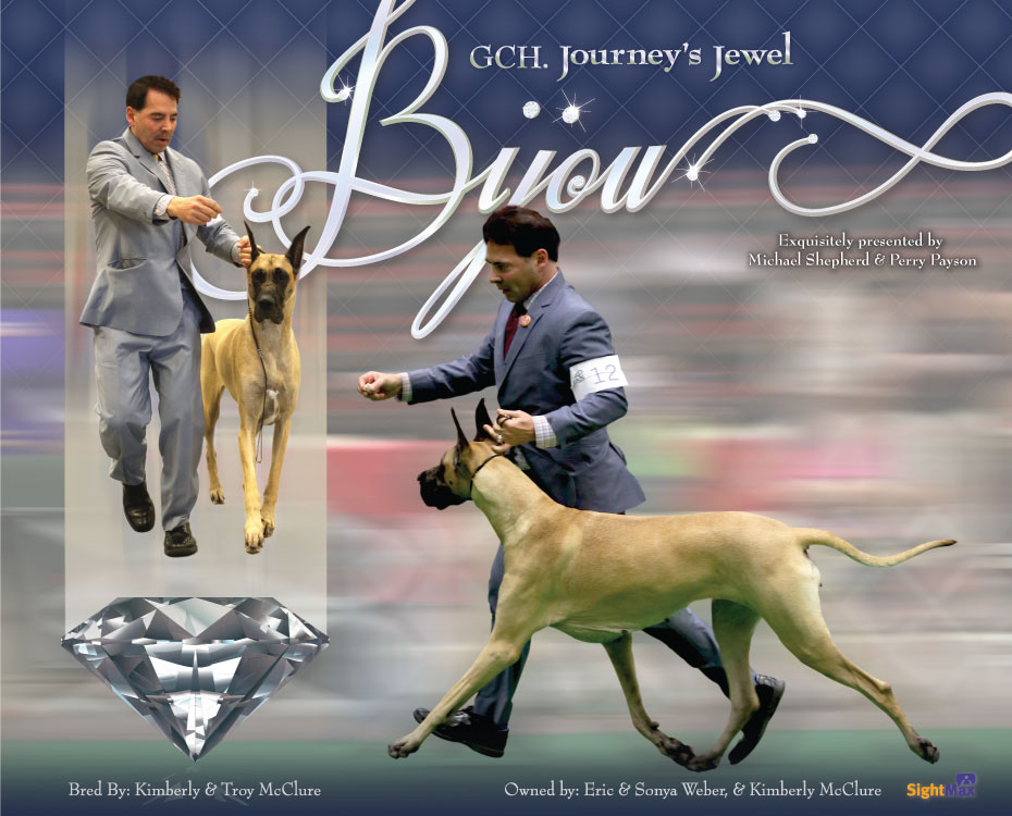 "August Feature – GCH Journey's Jewel ""Bijou"""