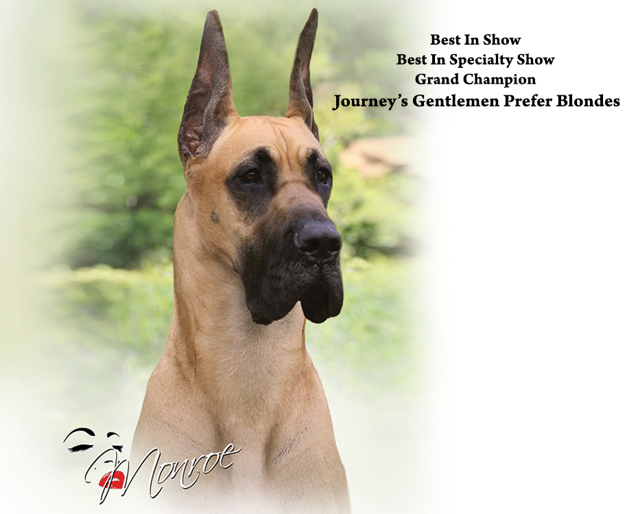 "November Feature – BIS BISS GCH Journey's Gentlemen Prefer Blondes ""Monroe"""
