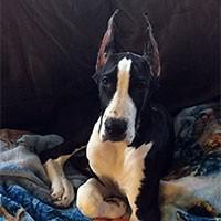 Puppy Photo Contest