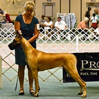 Owner Handler Interview