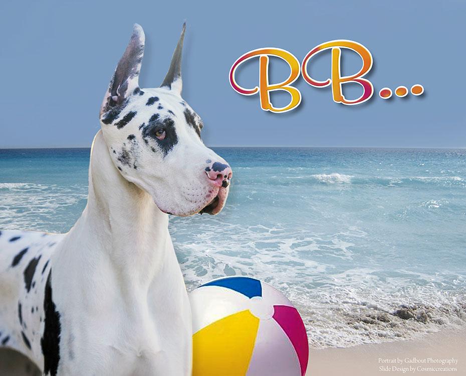 "May Feature – BISS GCH Ink Spot's Beach Blanket Bingo V Sum-Dane, AOM CHIC ""BB"""