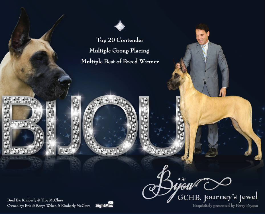 "July Feature – Bronze GCH Journey's Jewel ""Bijou"""