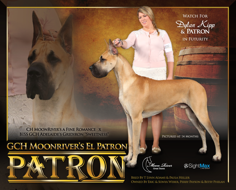 "October Feature – GCH MoonRiver's El Patron ""Patron"""