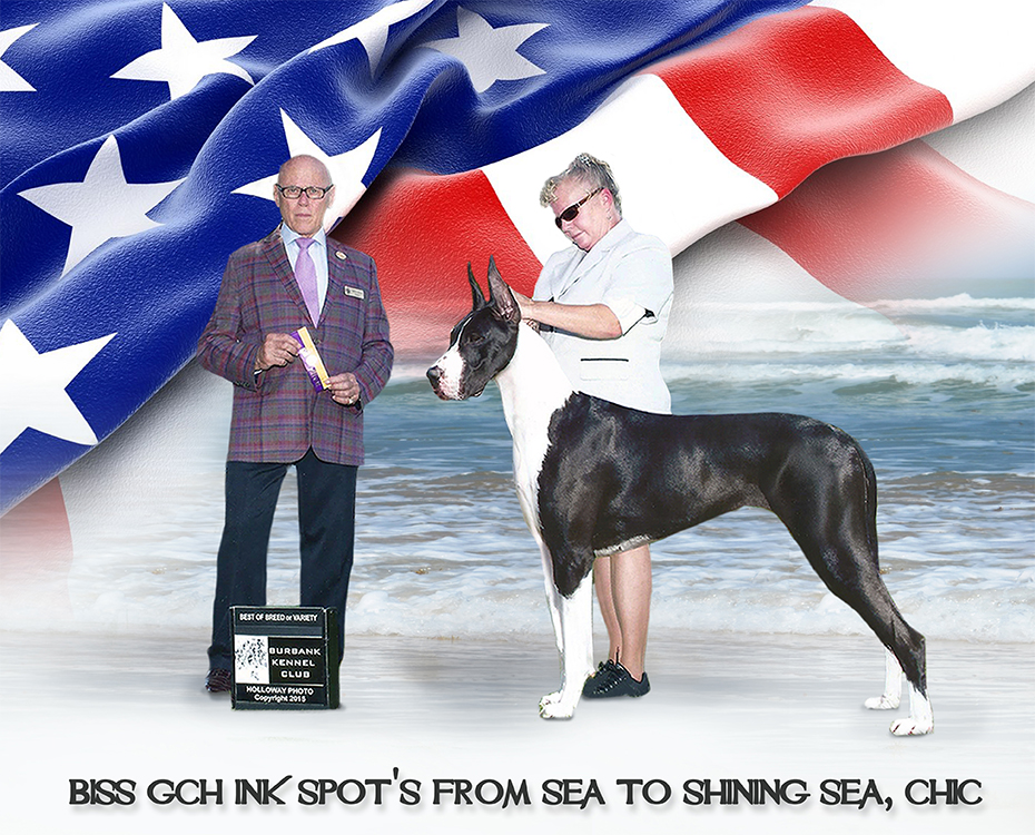 """May Feature – BISS GCH Ink Spot's From Sea to Shining Sea, CHIC """"Glory"""""""