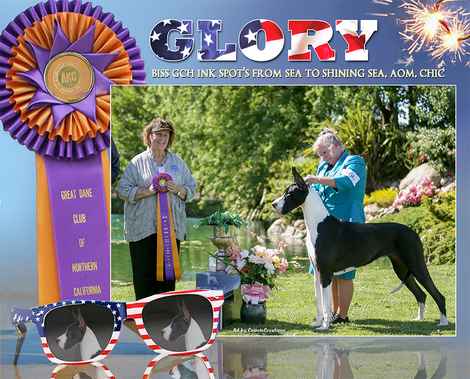 July Feature – BISS GCH Ink Spot's From Sea to Shining Sea, CHIC