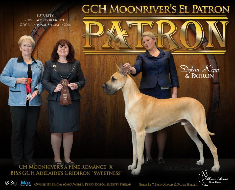 "December Feature – GCH MoonRiver's El Patron ""Patron"""
