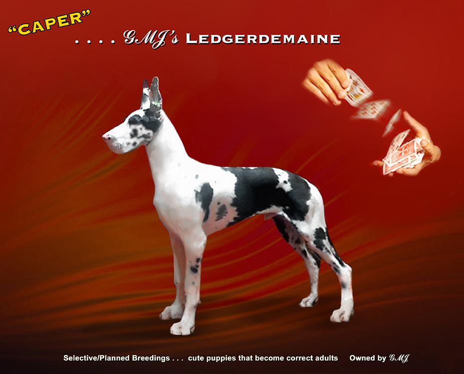 "February Feature – GMJ's the Legerdemaine ""Caper"""