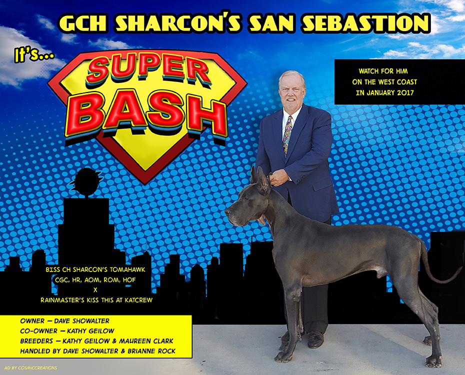 "January Feature – GCH Sharcon's San Sebastion ""Bash"""