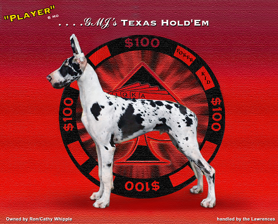 """February Feature – GMJ's Texas Hold'em """"Player"""""""