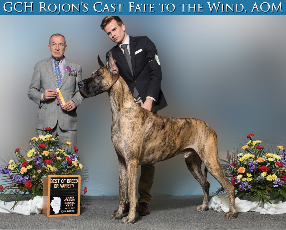 "March Feature – GCH Rojon's Cast Fate to the Wind, AOM ""Sirocco"""