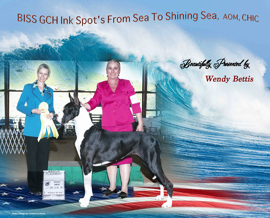"March Feature – BISS GCH Ink Spot's From Sea To Shining Sea, AOM, CHIC ""Glory"""
