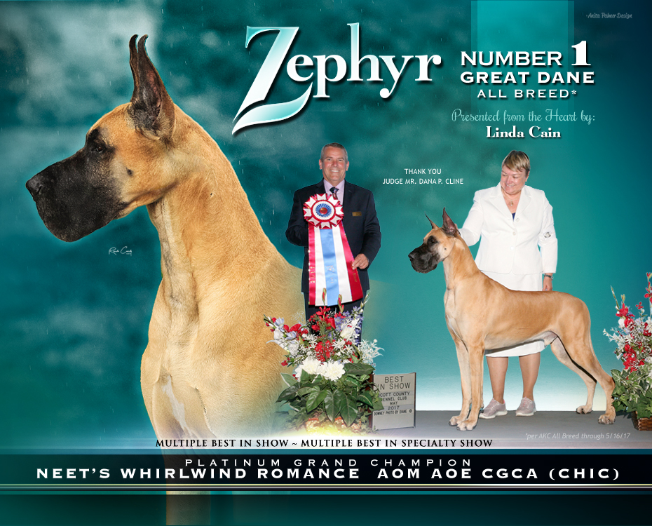 """June Feature – MBIS MBISS GCHP Neet's Whirlwind Romance, AOM AOE CGCA """"Zephyr"""""""