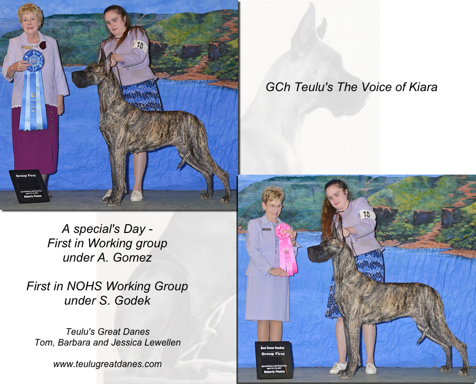 "May Feature – GCH The Voice of Kiara ""Kiara"""