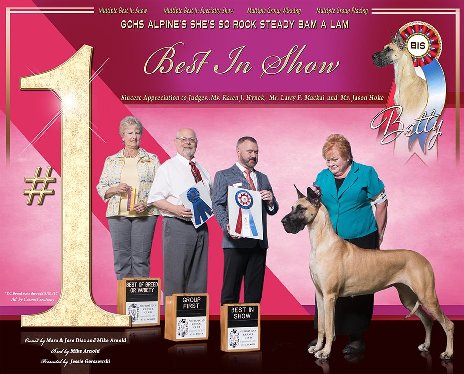"""October Feature – BIS MBISS GCH Alpine's She's So Rock Steady Bam A Lam """"Betty"""""""