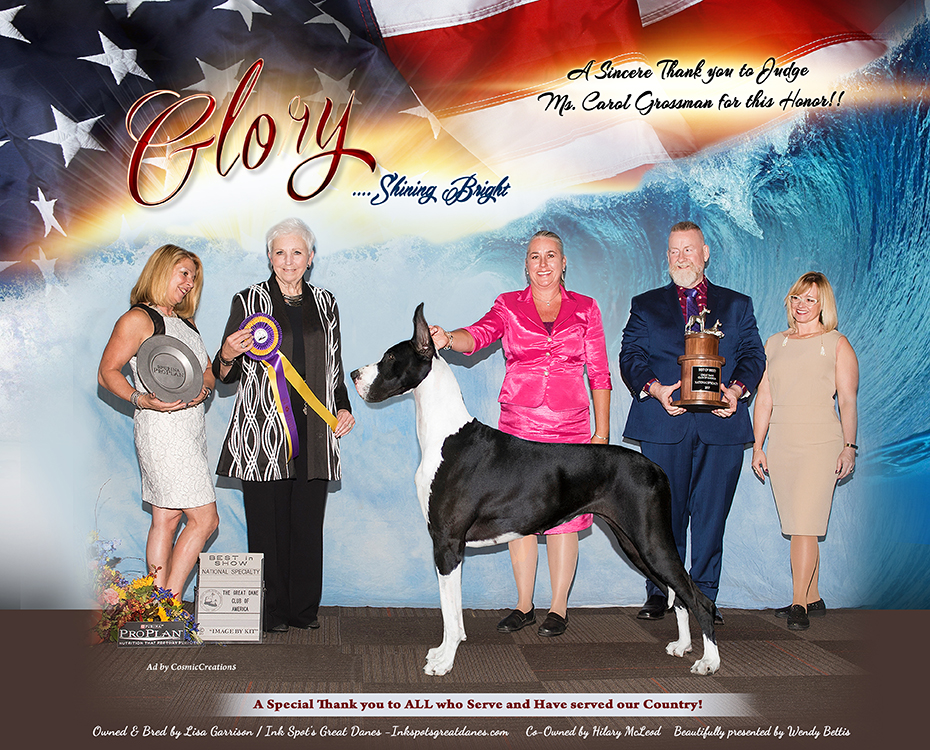 """December Feature – MBISS GCHS Ink Spot's From Sea To Shining Sea, AOM """"Glory"""""""