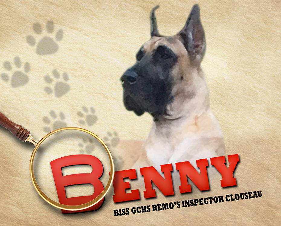 """January Feature – BISS GCHS Remo's Inspector Clouseau """"Benny"""""""