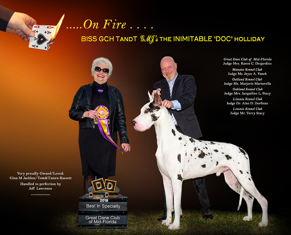 "March Feature – BISS GCH TandT GMJ's The Inimitable ""DOC"" Holliday ""DOC"""