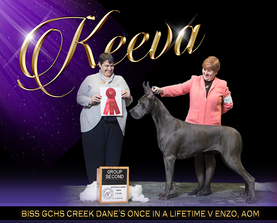 "March Feature – BISS GCHS Creek Dane's Once in a Lifetime V Enzo, AOM ""Keeva"""