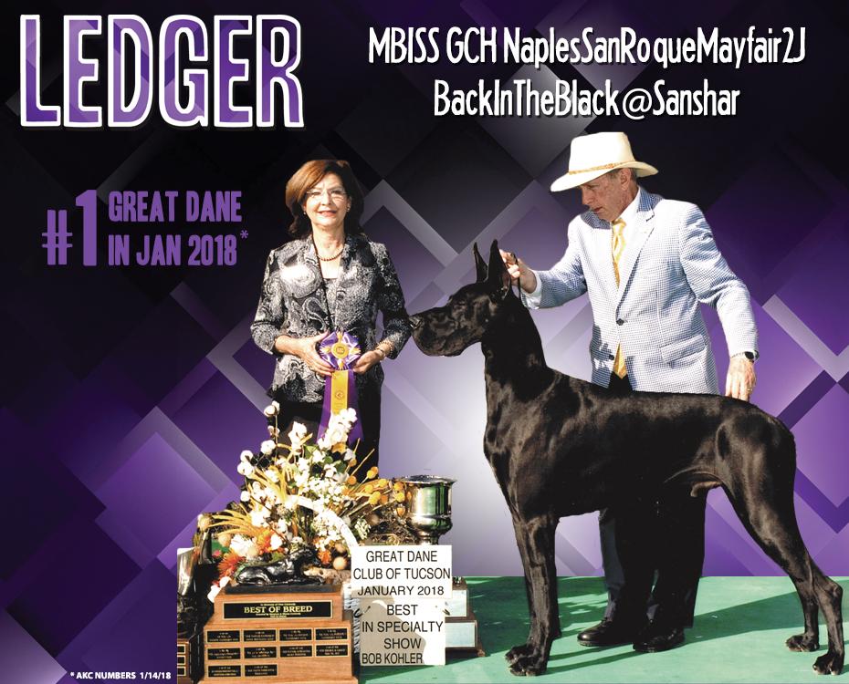 "February Feature – MBISS GCH NaplesSanRoqueMayfair2J BackInTheBlack@Sanshar ""Ledger"""
