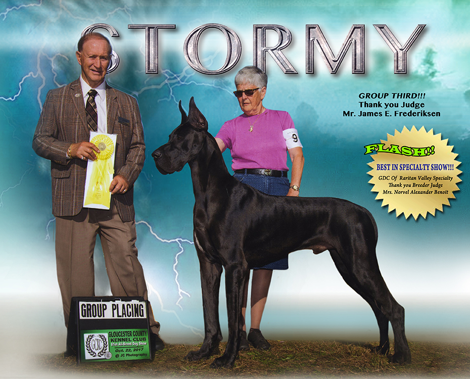 Feature – BISS Am GCH Can CH Jerdan's High Intensity Category 5 V Victoria, CGC, Trick Dog