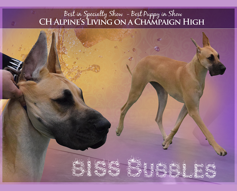 "Feature – BISS BPIS CH Alpine's Living On A Champaign High ""Bubbles"""