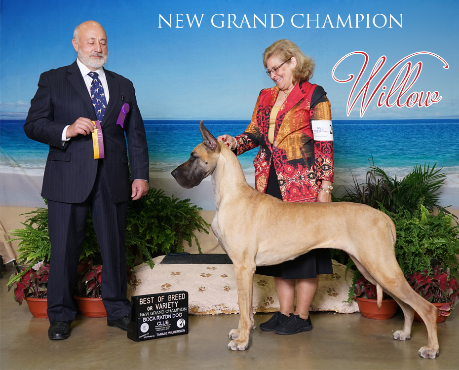 GCH NorthStar-7thHeaven-Kativa-ZephyrMoore Love Her Madly