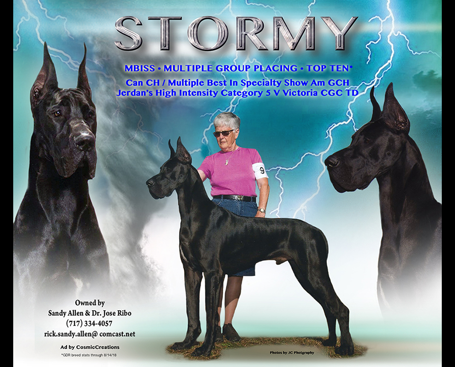 MBISS Can CH MBISS Am GCH Jerdan's High Intensity Category 5 V Victoria, CGC TD