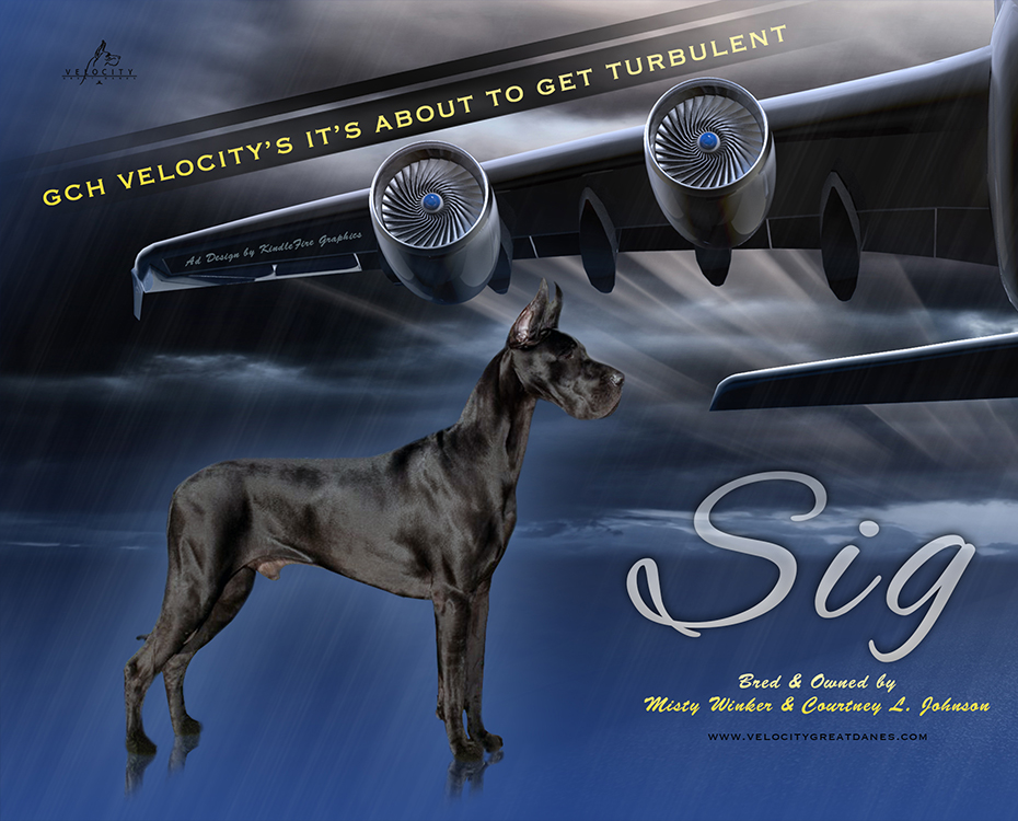 GCH Velocity's It's About To Get Turbulent